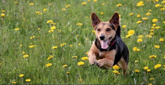 dog-2228595_1920
