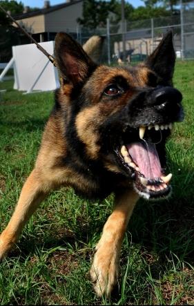 dog-86422_1920